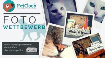PetCloob #Fotowettbewerb #Katzen