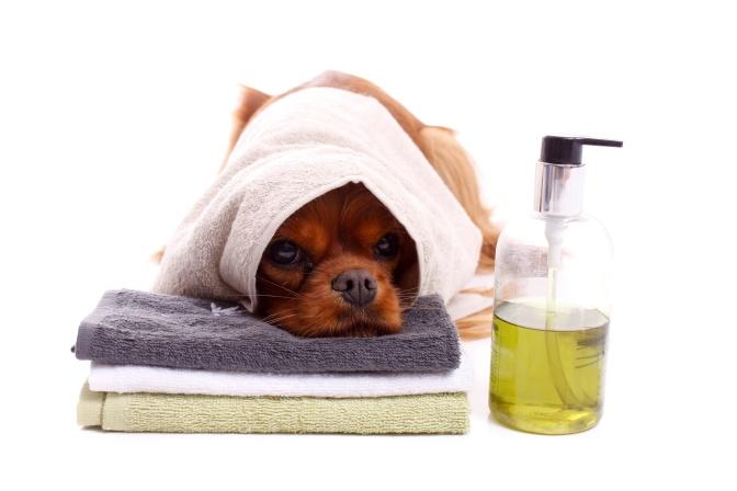 Erfrischung für Hunde in Wiens erstem 24h Self-Service Hundewaschsalon