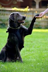 Dogdance © R. Ploder