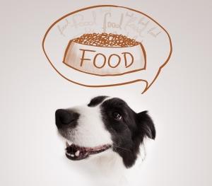 Hunde Trockenfutter Hunde Nassfutter Hunde Ergänzungsfutter Hunde Snacks Rohfleisch/Barf/Corf Vegetarisches Futter Hunde Spielzeug Hunde Zubehör Hunde Schlafplätze Hunde Gesundheit Hunde Pflege