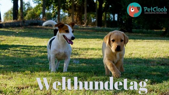 Zum Welthundetag:  Die schönsten Zitate rund um den Hund