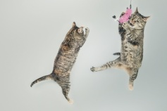 jumping-cute-playing-animals-medium