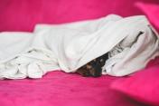 kaboompics.com_Sleeping puppy - Kopie