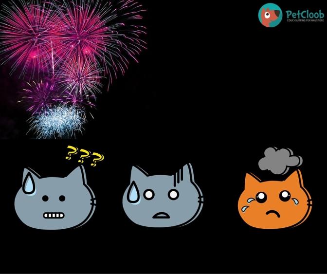 Mit Katzen gemeinsam ins Neue Jahr