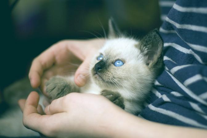 Catsitting-Tipps für Einsteiger und Fortgeschrittene – Teil 1
